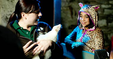 Animal encounter at Creatures Of The Night at ZooAmerica