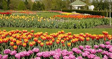 Tulips at the gardens